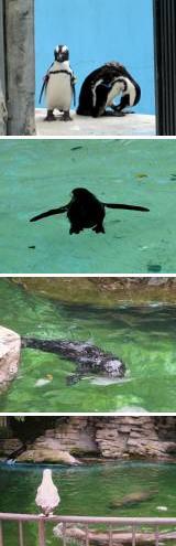 ペンギン&あしか